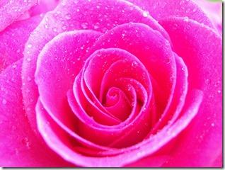 Pink-pink-color-4286512-2560-1920-1mlnj7q